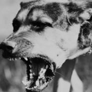 Clasificación de los Trastornos Psicológicos Clínicos del Perro II